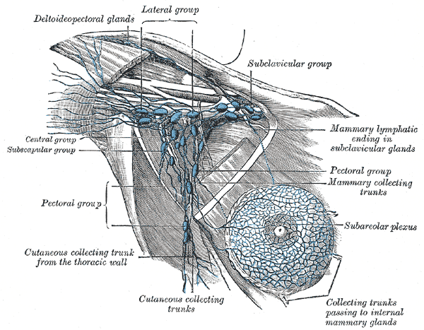 arm-pits